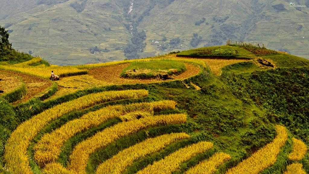 Best trekking in Sapa