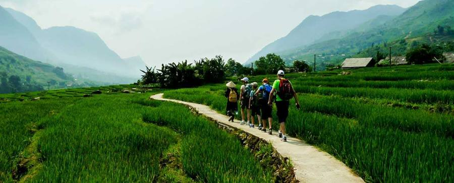 Sapa Trekking through Rice Fields