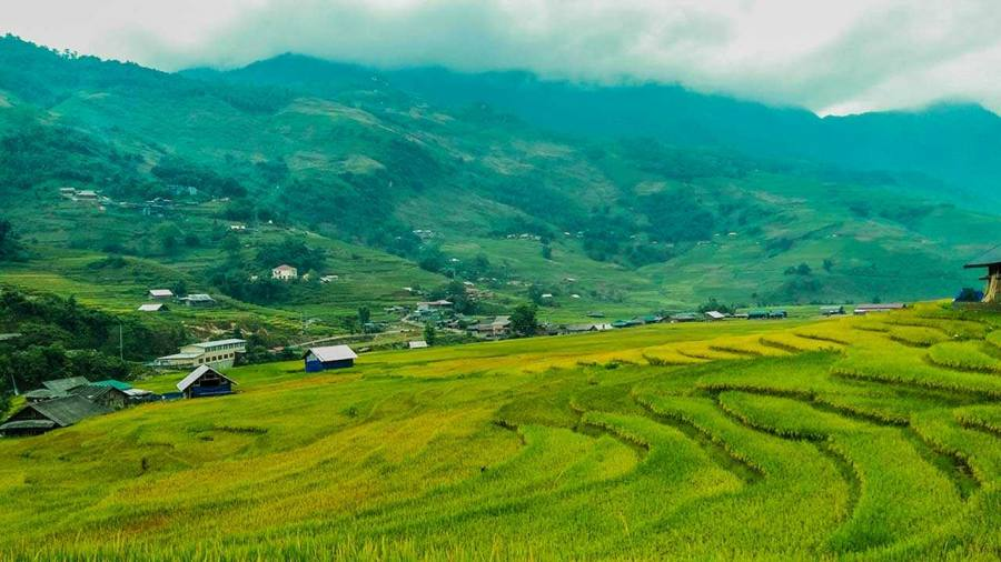 Amazing rice terraced fields in Ta Van village