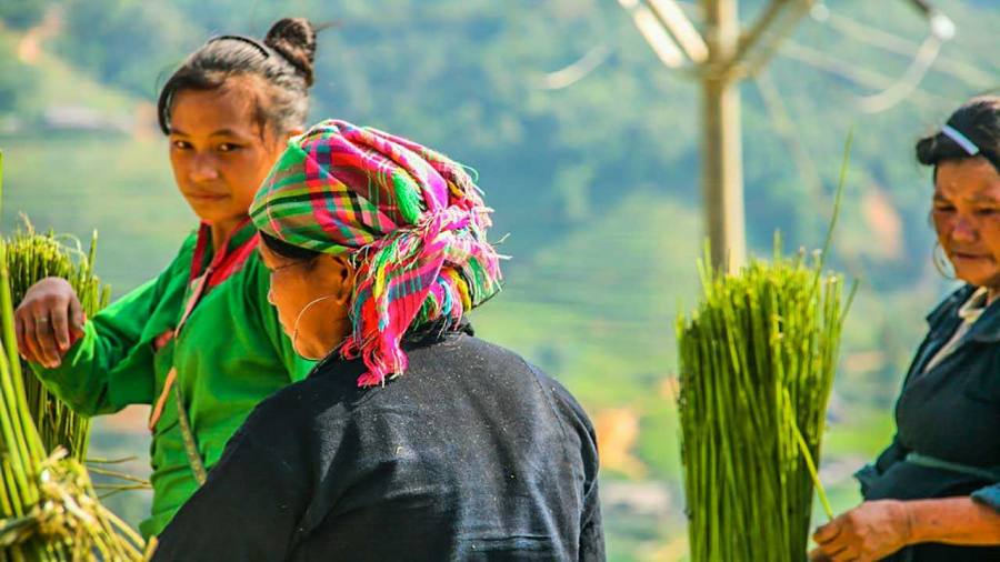 Hmong tribe in Sapa