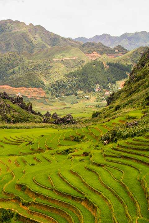 Sapa trekking and homestay